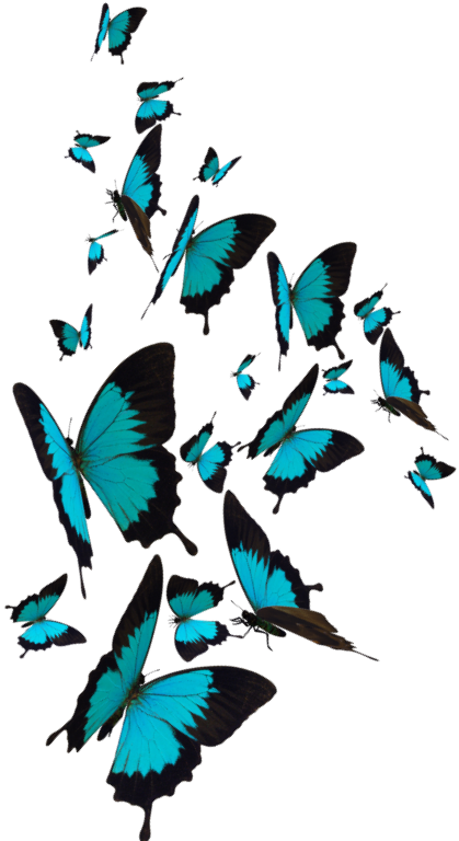 butterflies_transparent3