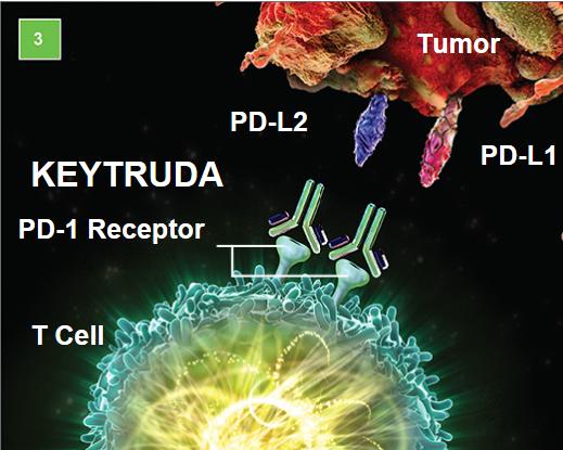 Triple Negative And ER Positive Tumors: I-SPY2 Neoadjuvant