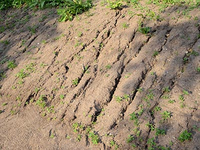 Image of an eroding slope with a lack of soil