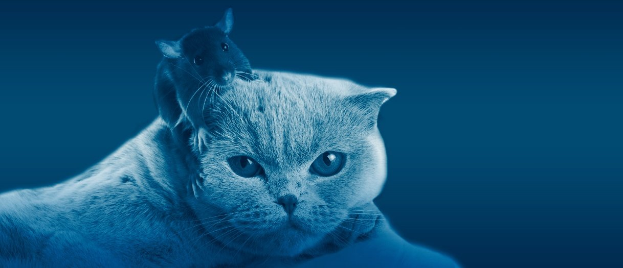 Cyber security cat and mouse