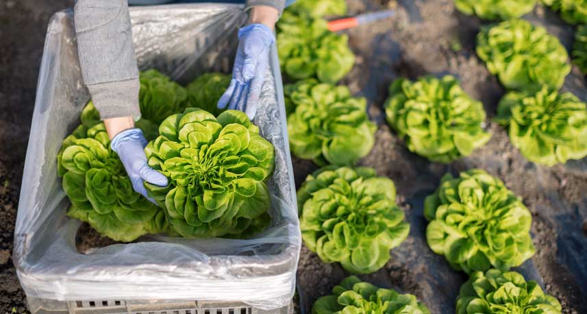 The Advantages Of Plastic Agricultural Containers
