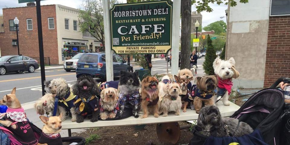 5 Perks of Being a Pet-Friendly Restaurant | Toast POS