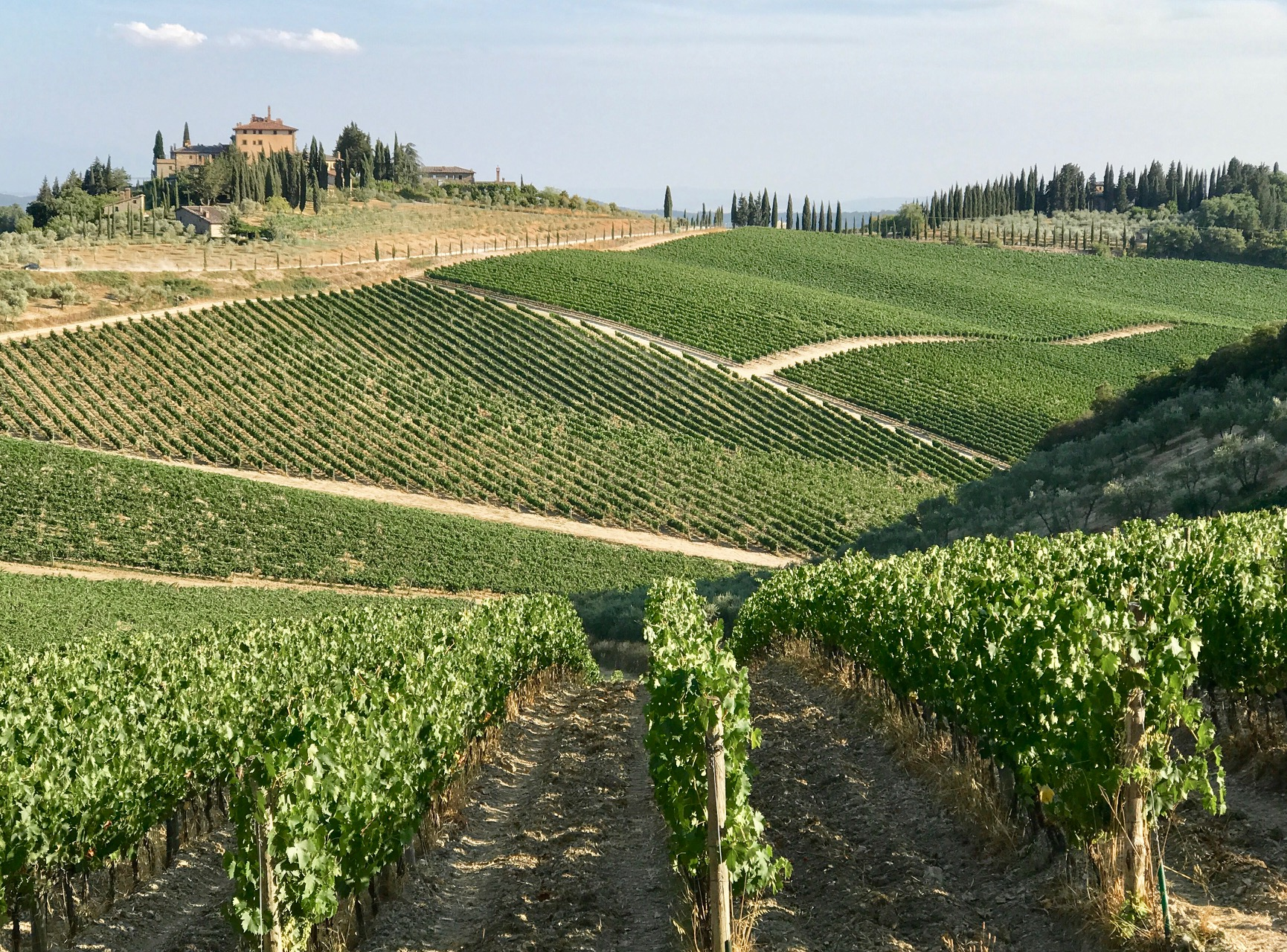 A photograph of an Italian vineyard.