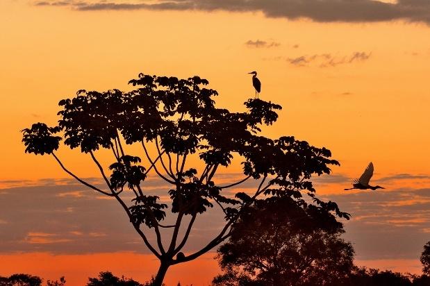 Sunset in Brazil's Pantanal