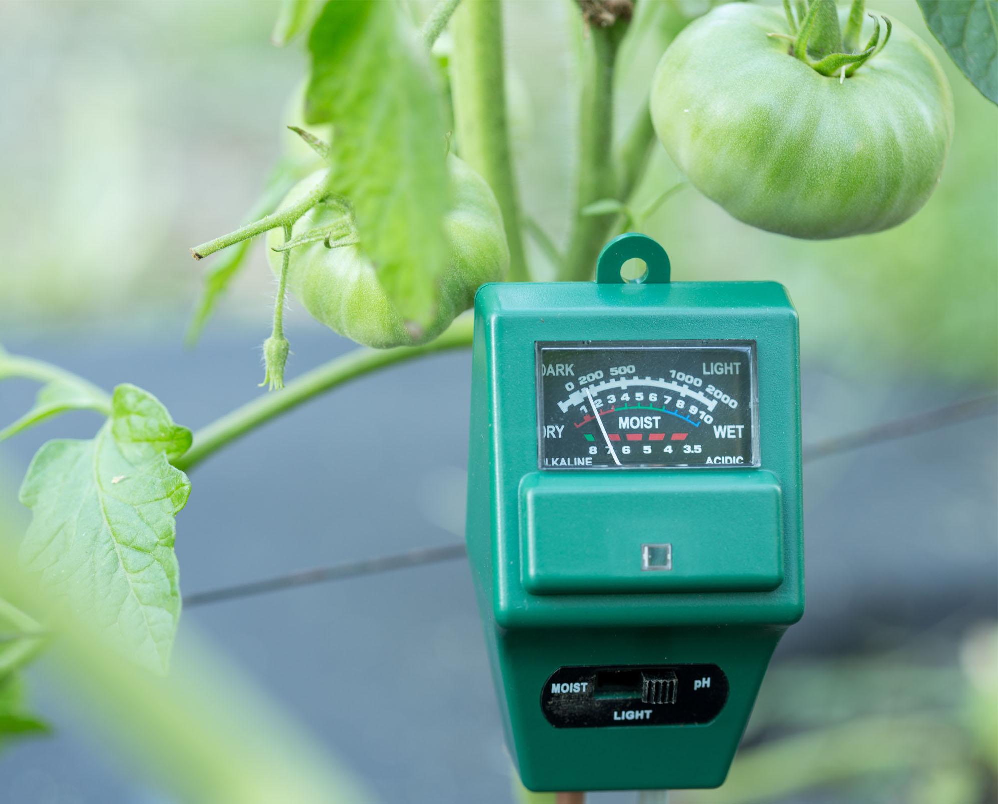 Hoe data de Nederlandse tuinbouw zijn voorsprong teruggeeft
