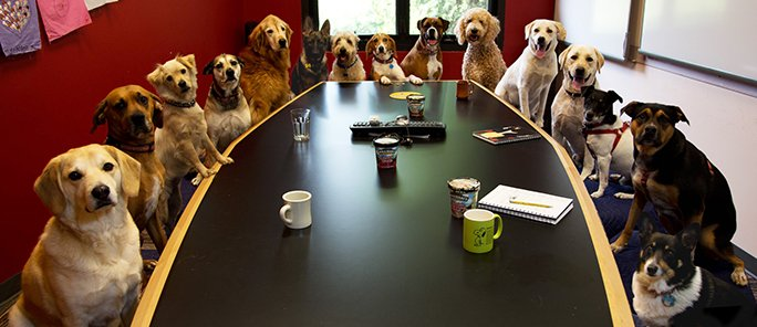 Meanwhile at todays meeting on feline healthcare