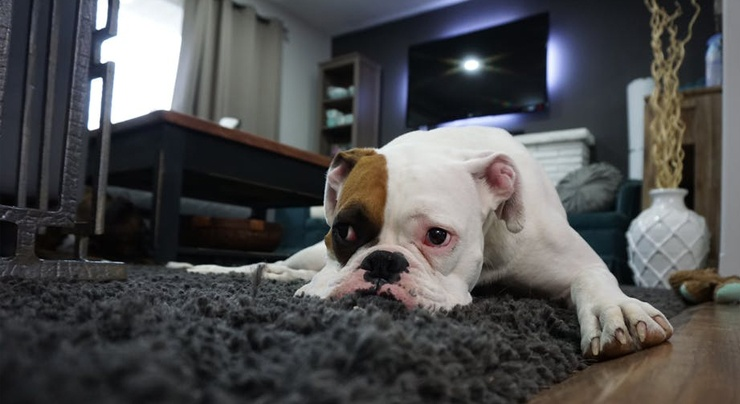 vender-piso-en-sevilla-con-mascota-1