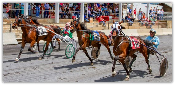 Wine_and_Trotter_Racing_Horses-550