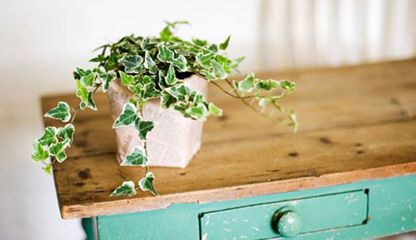 Easy To Grow Air Purifying Plants | Shipley Energy