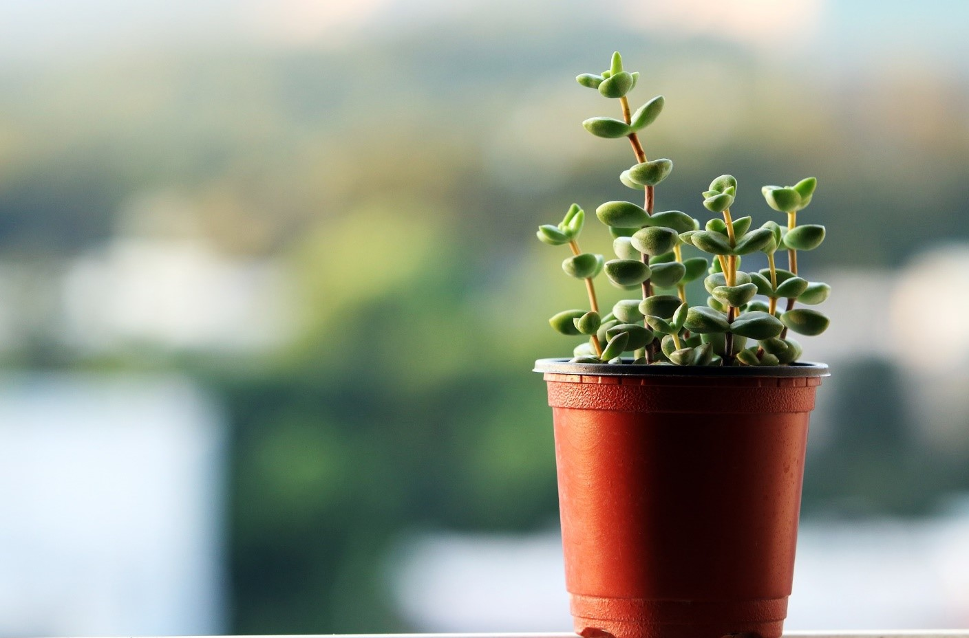 5-office-plants-that-can-spruce-up-your-workplace-1