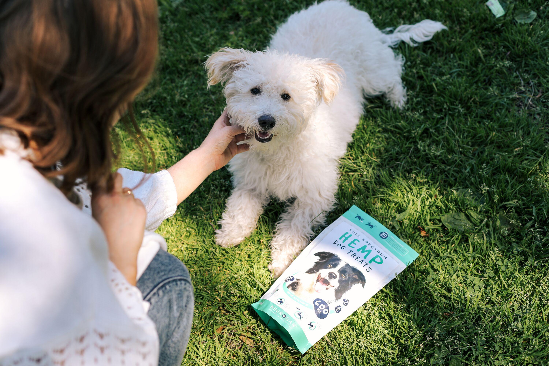 neurogan dog chews