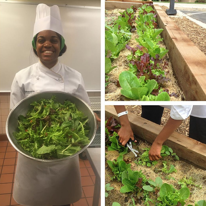 JWU Denver student Jasmine Smith harvests greens from the Denver Campus garden.
