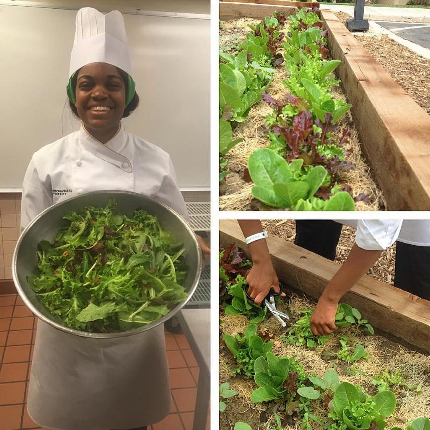 JWU Denver student Jasmine Smith harvests greens from the Denver Campus garden.