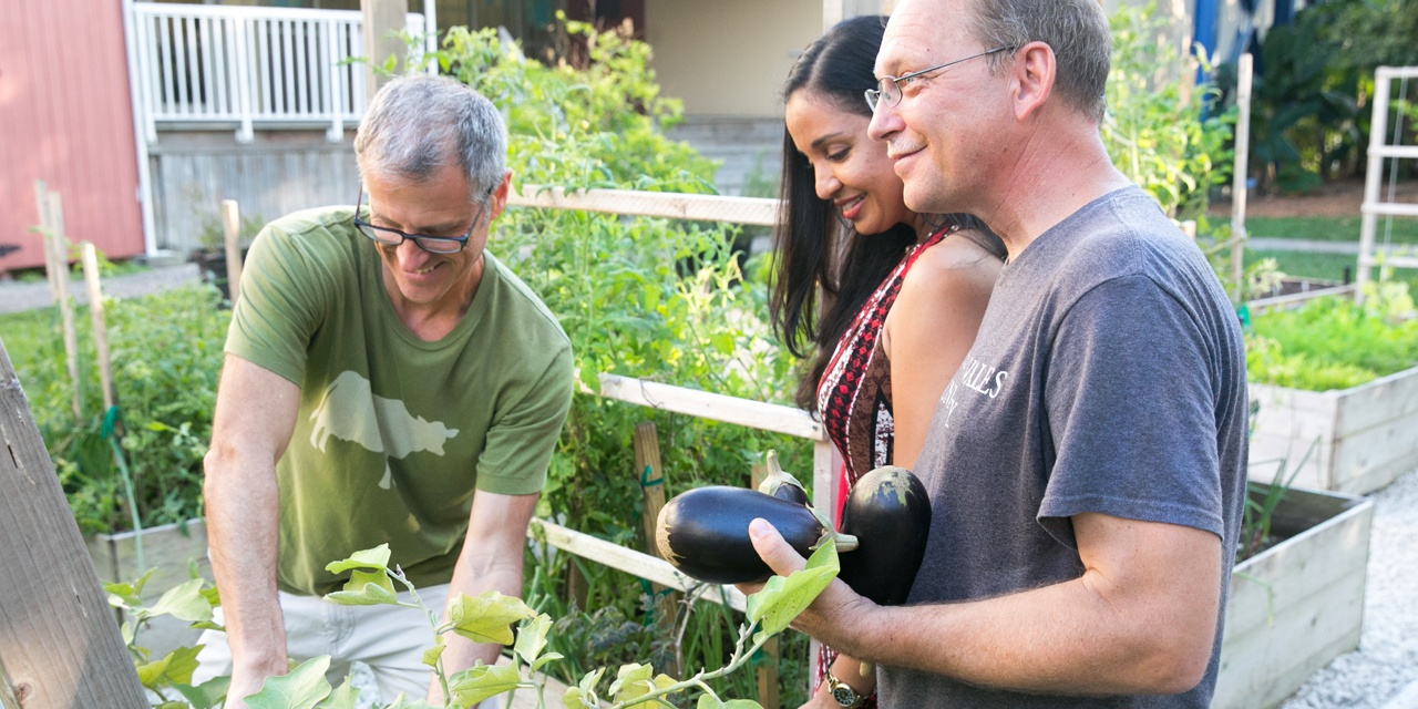 Pickling eggplants in JWU North Miami's Edible Garden.