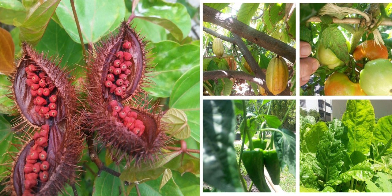 The garden is home to more than 100 different species of edible fruits, vegetables and herbs.