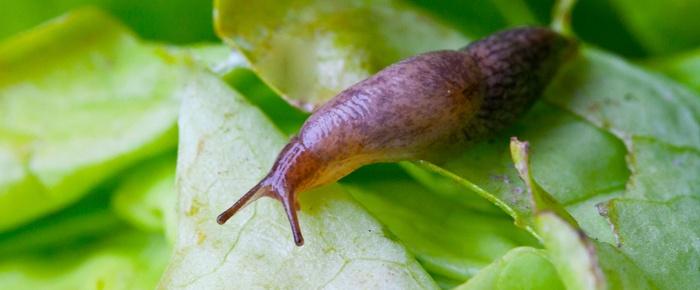 snail_header