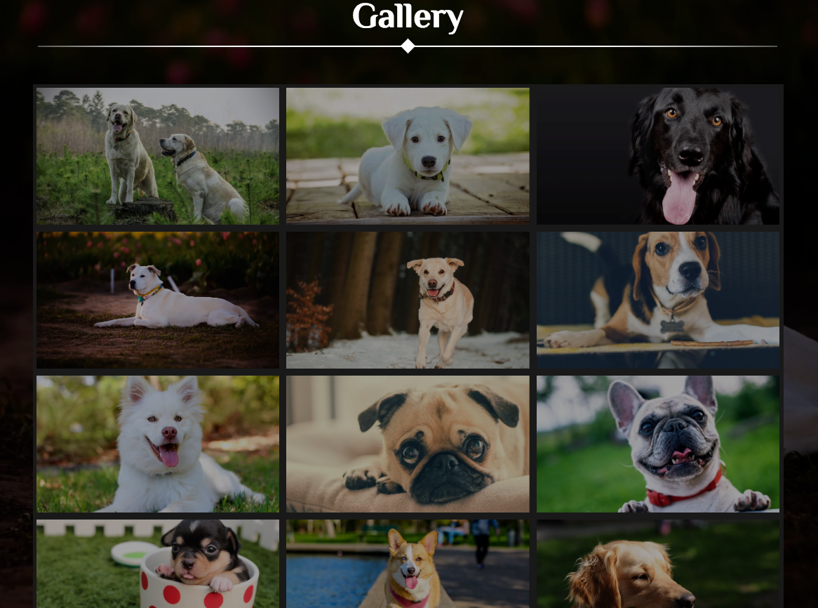 Gallery Template With Advance Features