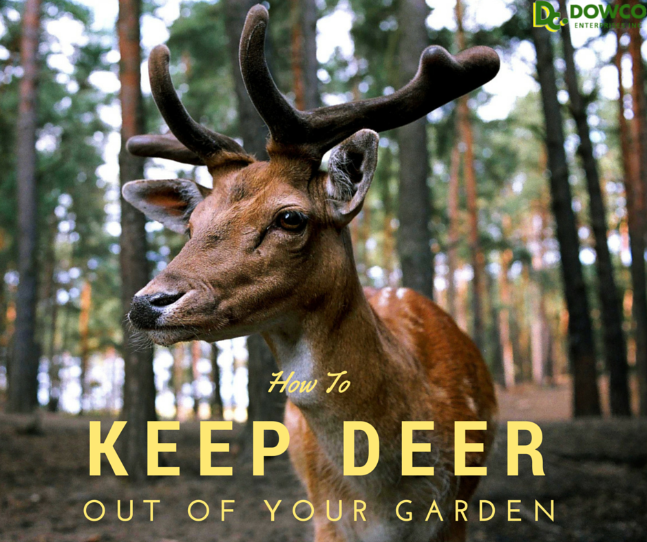 17 Best 1000 Ideas About Deer Repellant On Pinterest Gardening Low Cost Way To Keep Deer Out Of