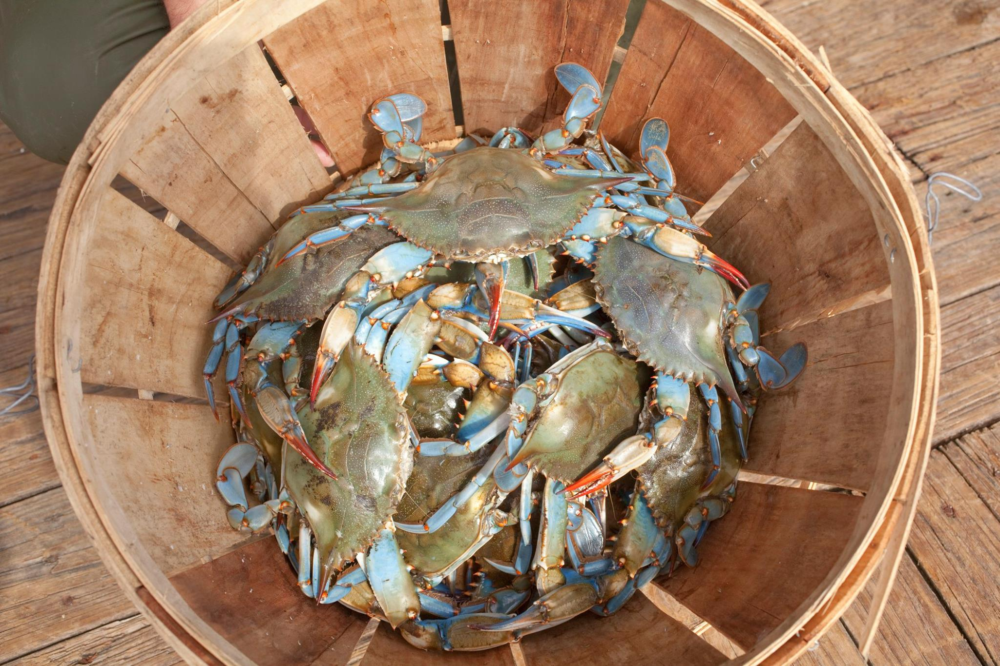 Louisiana_Blue_Crab_Louisiana_Seafood_Marketing_and_Promotions_Board_Deanies_Seafood_Restaurant_New_Orleans.jpg