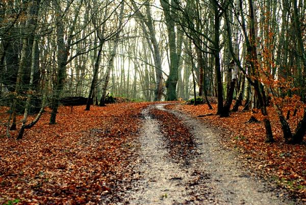 waltham forest london