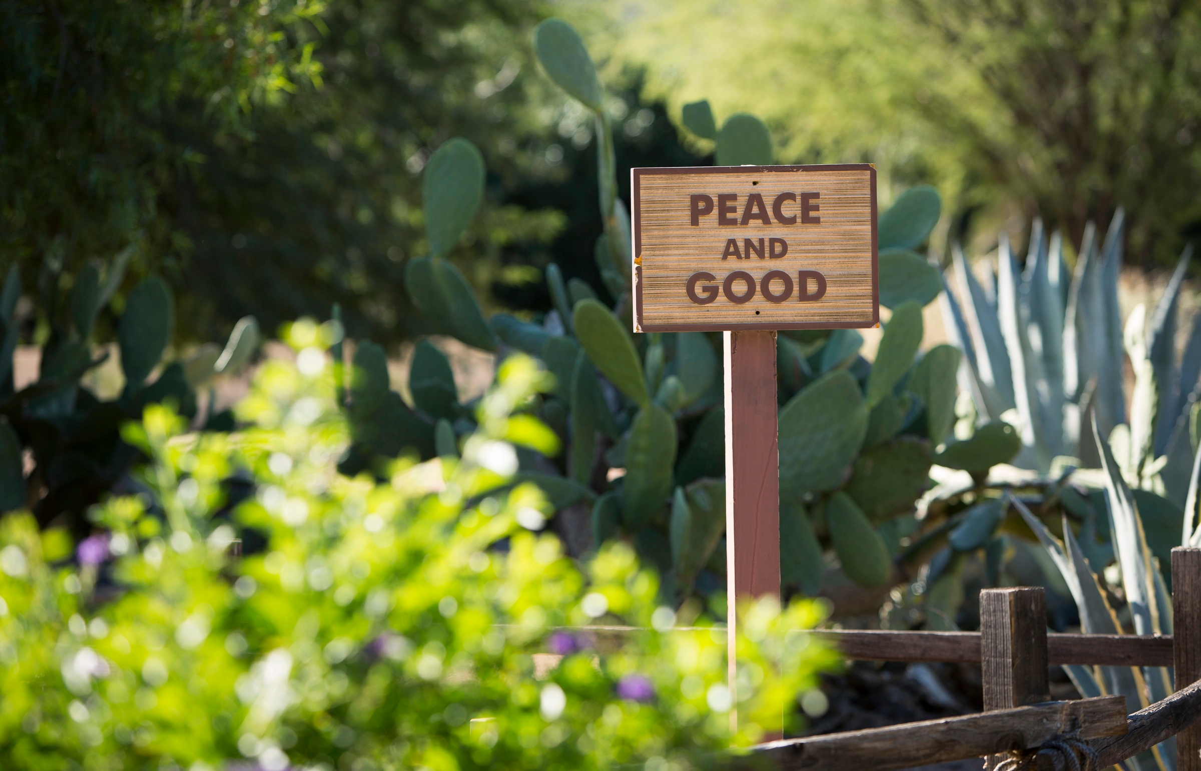 Saint Francis and Pope Francis: Our Environmental Teachers