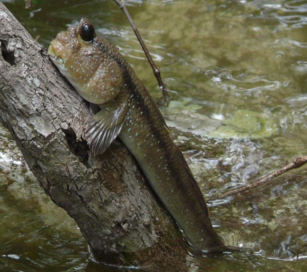 fish-climb-tree.jpg