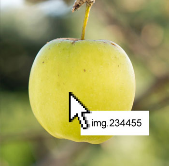apple-2.2.jpg