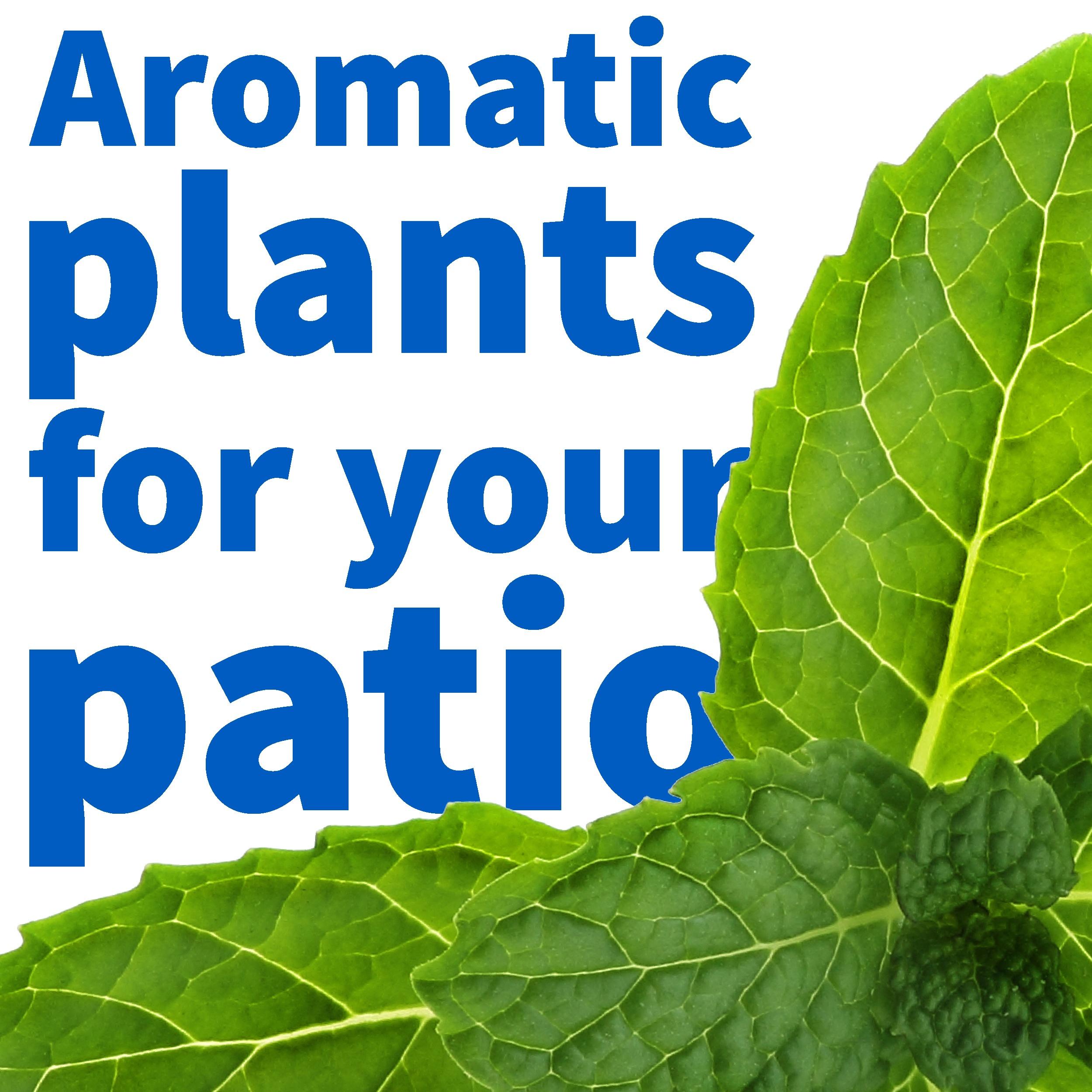 Aromatic_plants-01