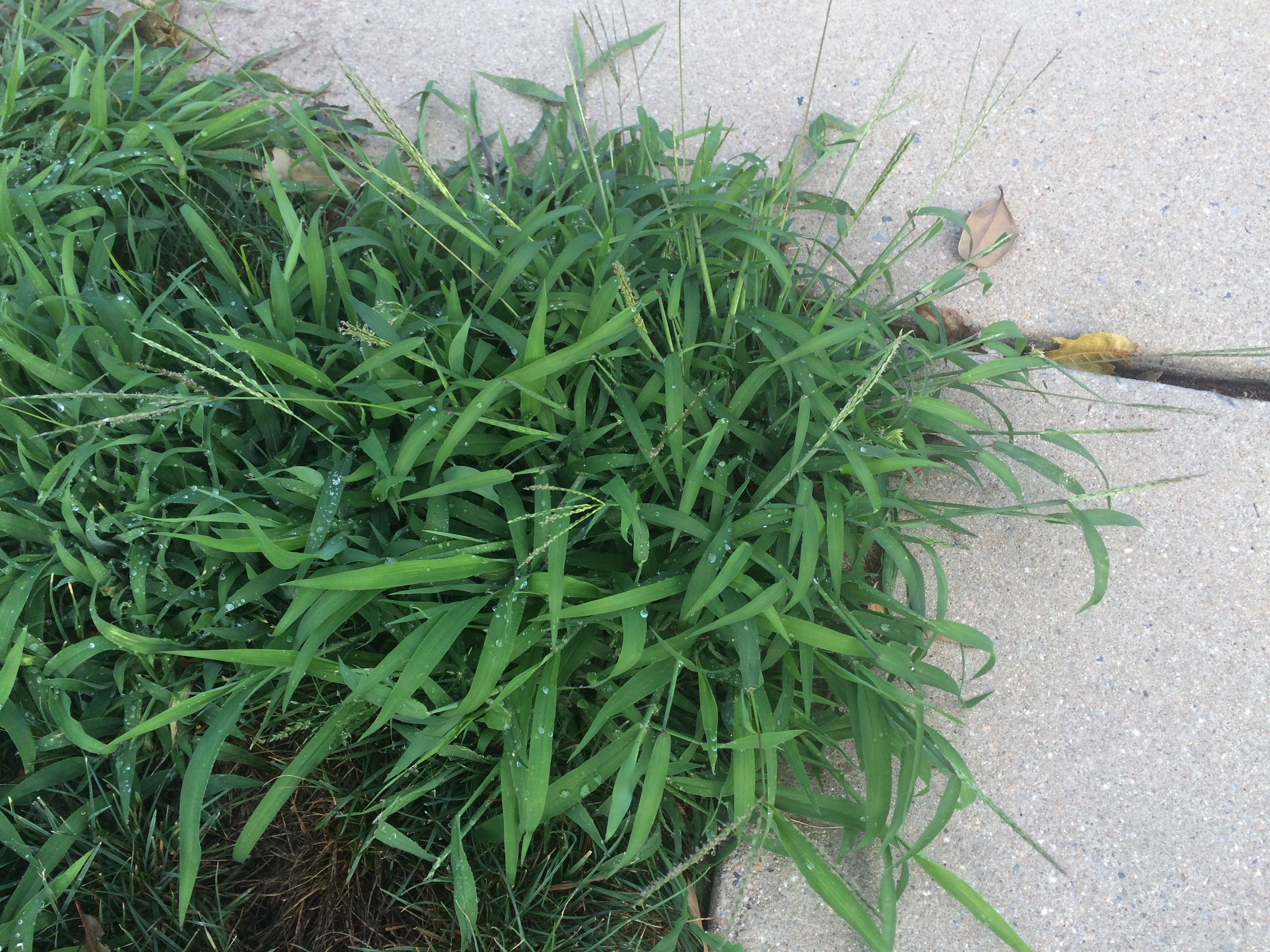 Common Texas Lawn Insects, Diseases & Weeds Every Property