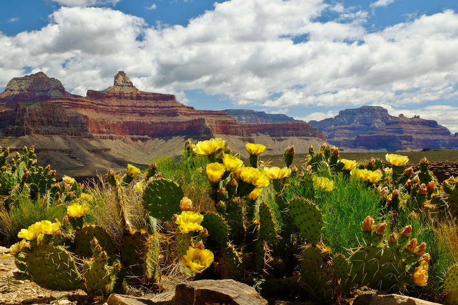 5 Reasons to Visit the Grand Canyon This Summer