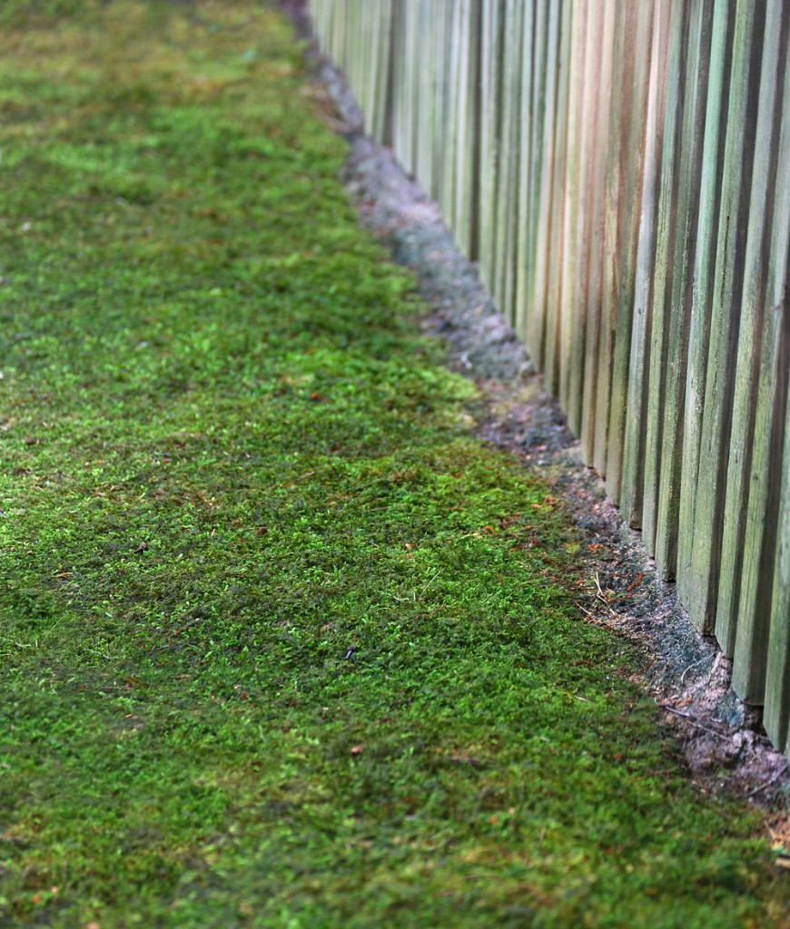 8 Ways To Control Moss In Atlanta Georgia