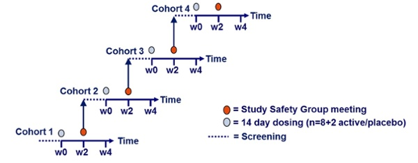 The phases of preclinical and clinical trials