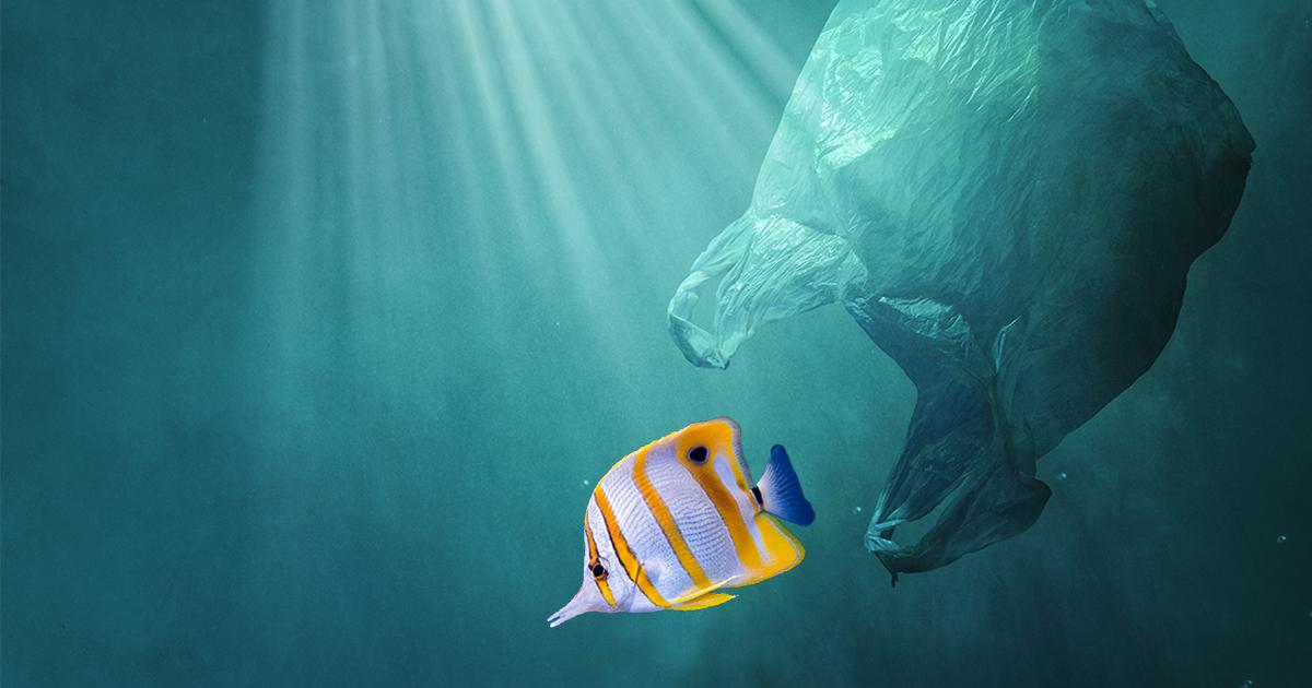 World Water Day_fish swimming plastic ocean