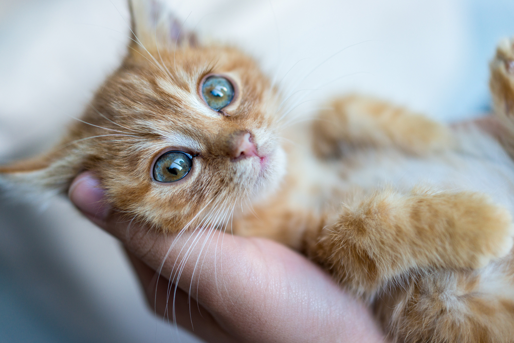10 Foods That Are Toxic to Cats
