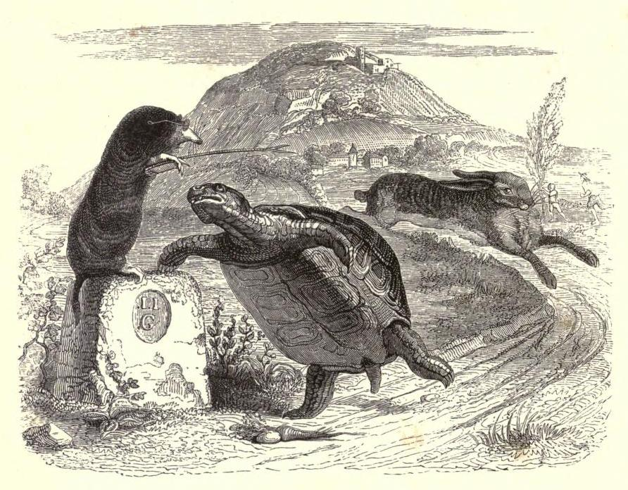 Grandville_tortoise.jpg