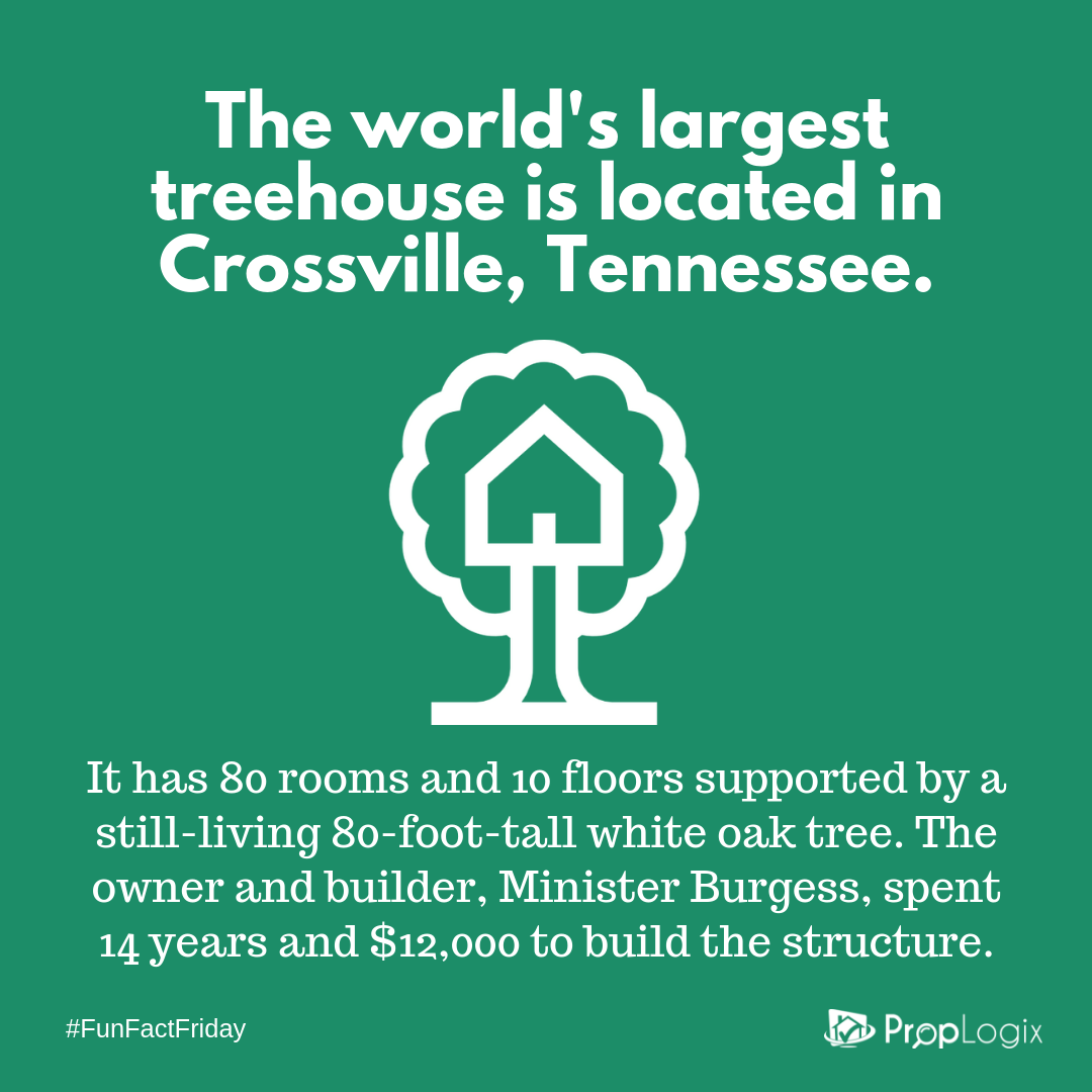 Fun Fact Friday - largest treehouse in the world