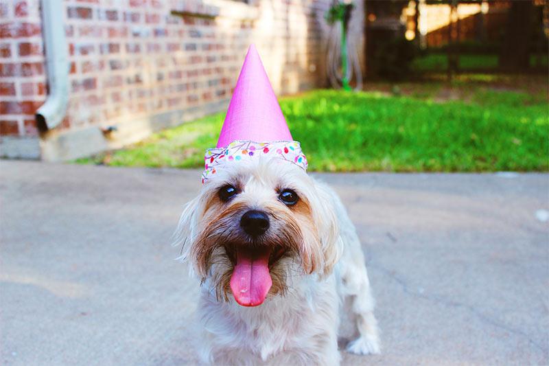 Celebrate youre title company milestones
