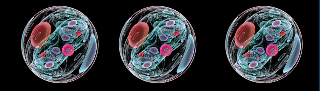ilustração de embrião de 13 dias