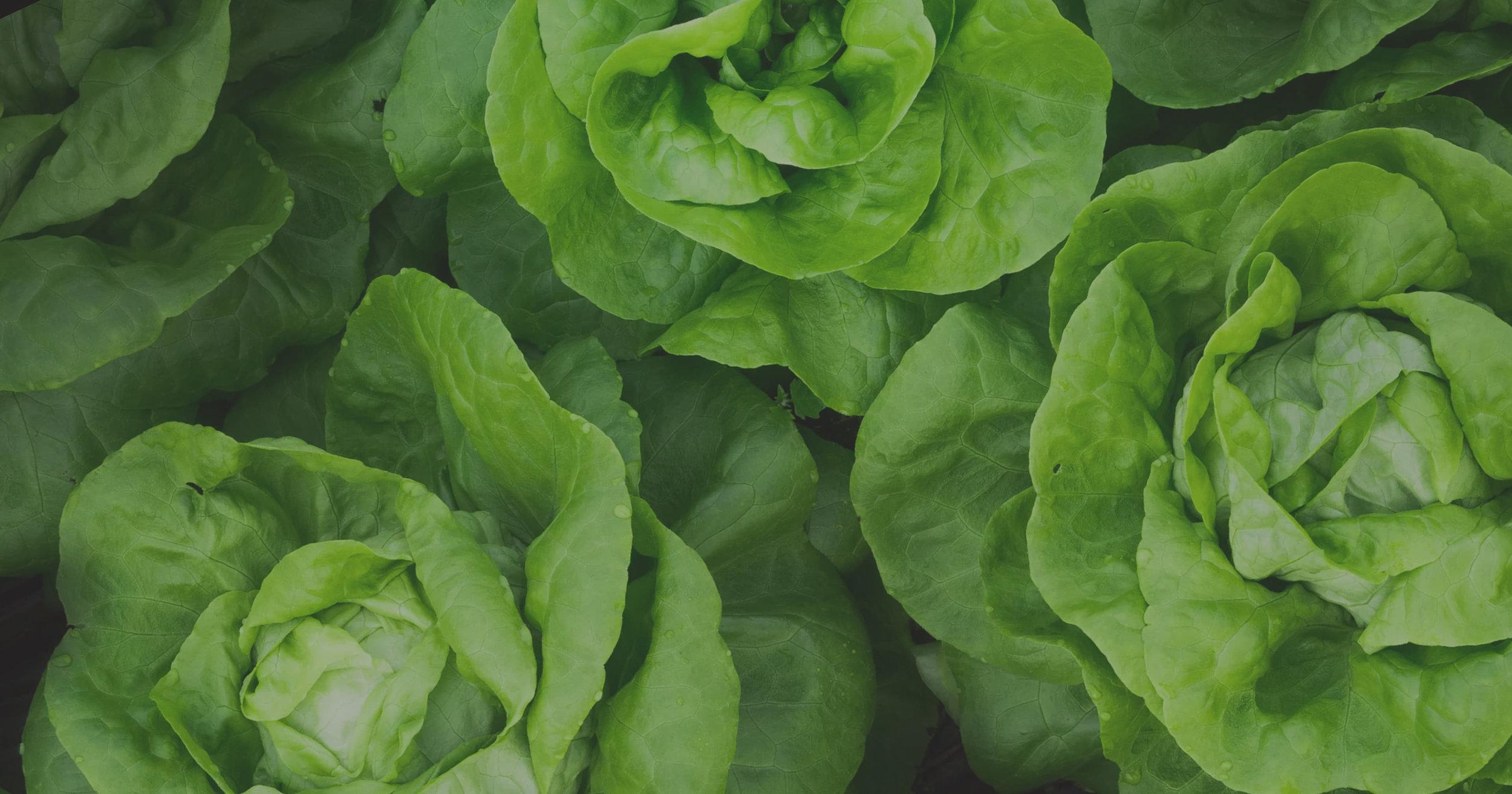 Full Harvest - Buy Imperfect, Process Grade & Surplus Produce — Full