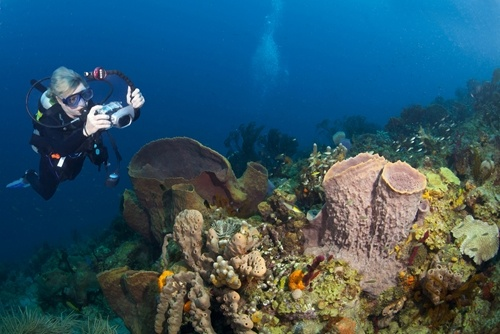 As a traveling nurse, you can choose to live in a state the offers opportunities for diving.