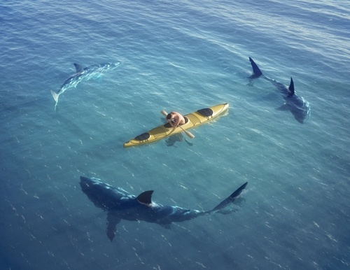 Shark Week: If your patients were sharks, which would they be?