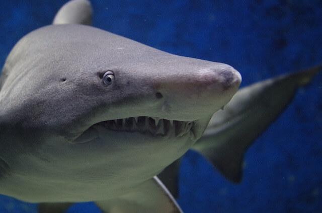 Five Hacks for Making It on Shark Tank