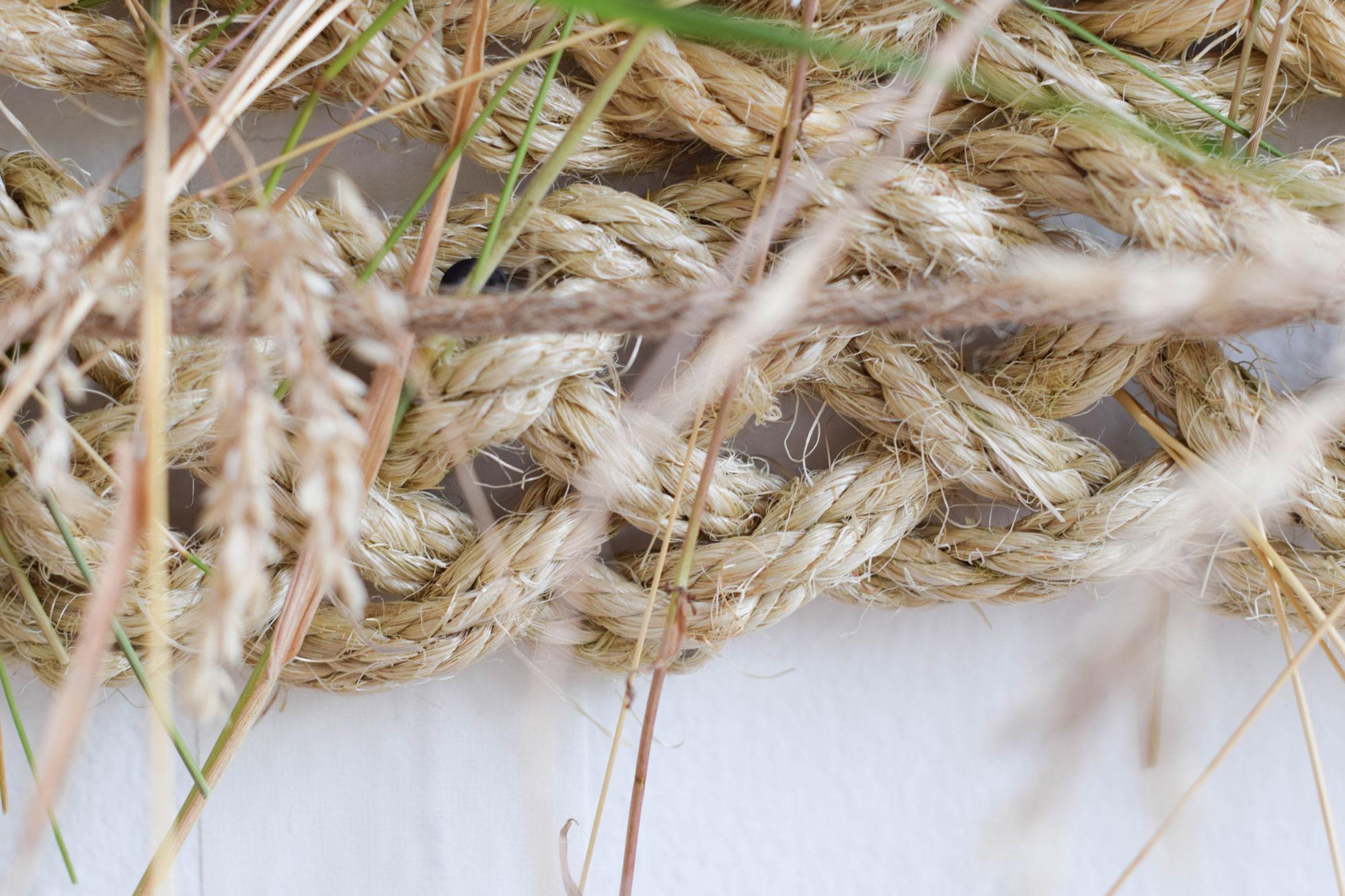 BBJ-Photoshoot--Curious-Lola---Grass-(16)