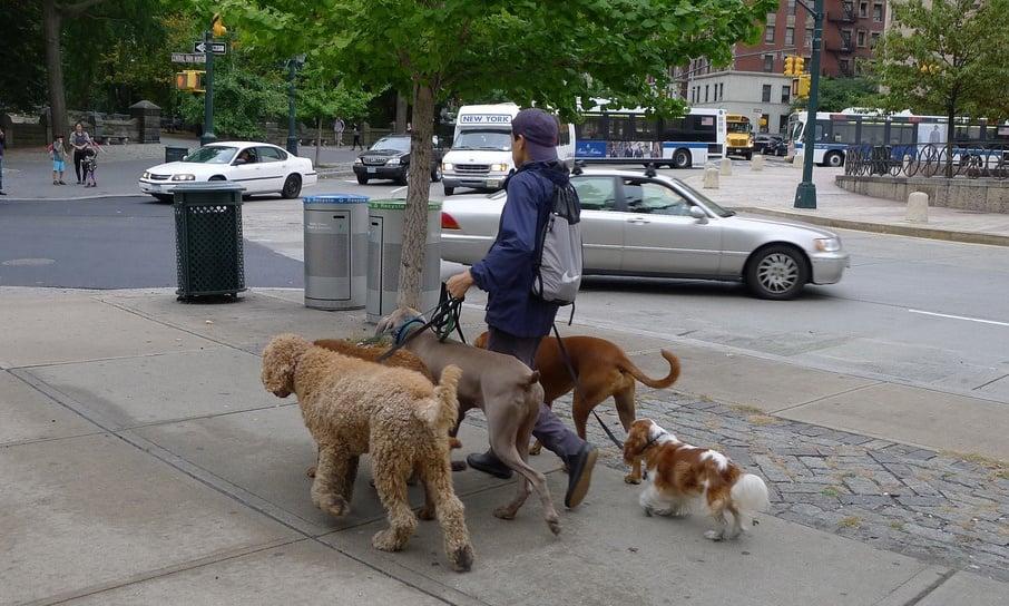 Photo credit: dog walker by dee_dee_creamer@flickr.com