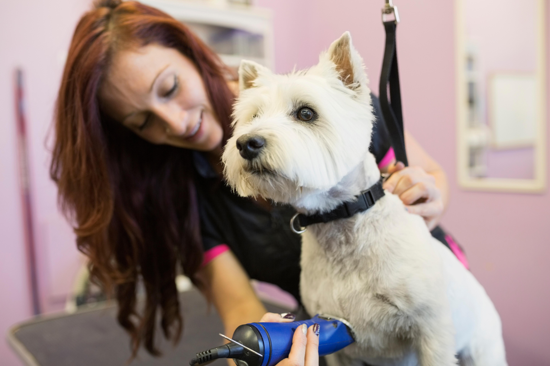 картинка собака парикмахер