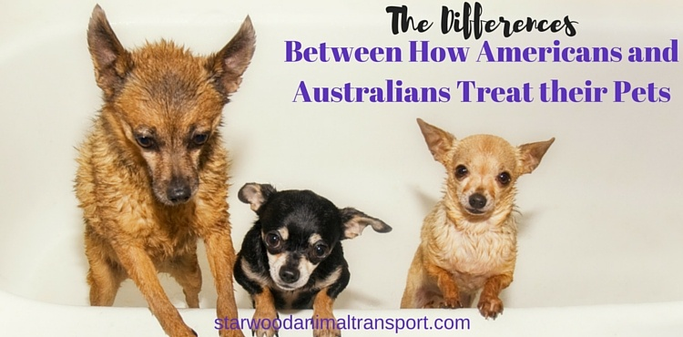 SW_-_The_Differences_Between_How_Americans_and_Australians_Treat_their_Pets.jpg