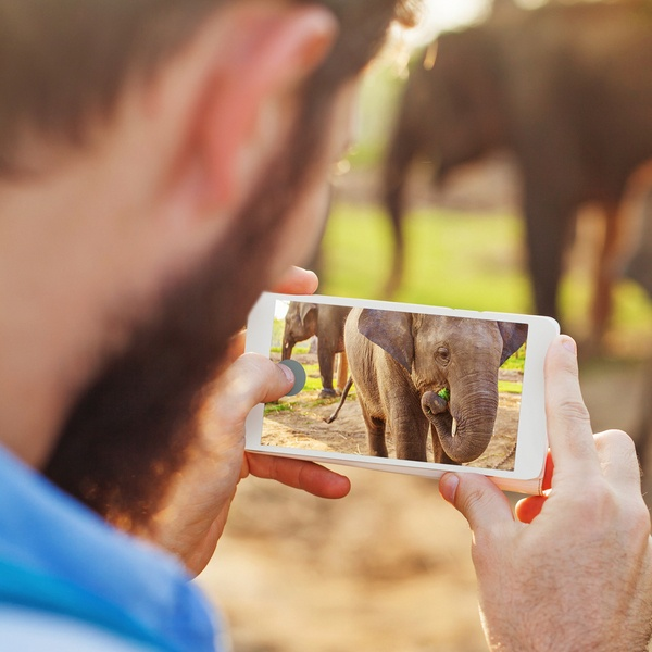 Male taking photo of elephant