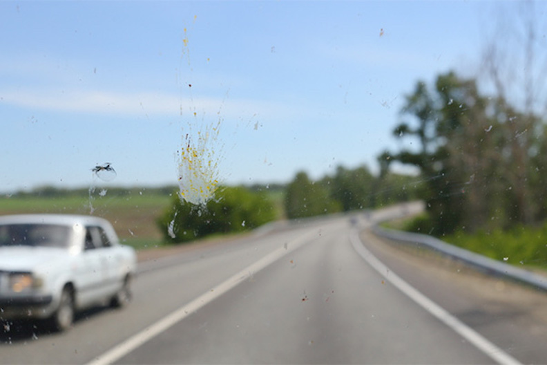 bug-splattered-windshield