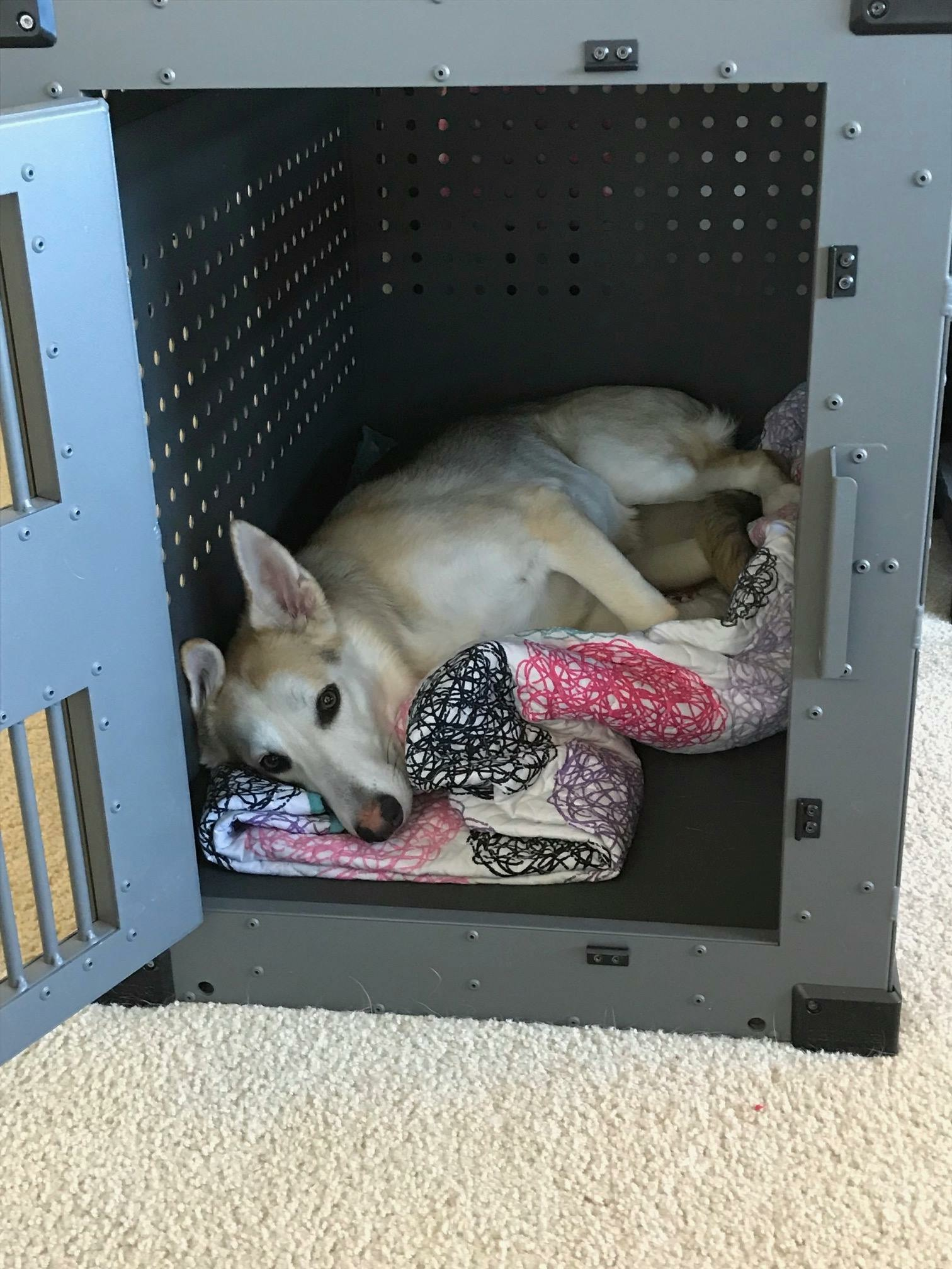 rescue dog comfortable in high anxiety impact dog crate