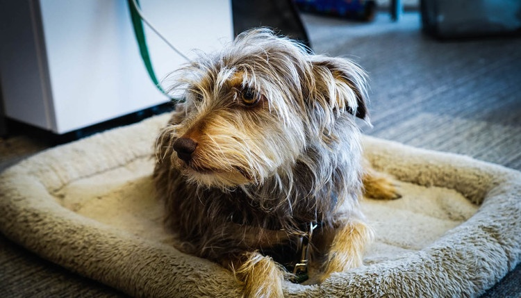 Pets in the workplace
